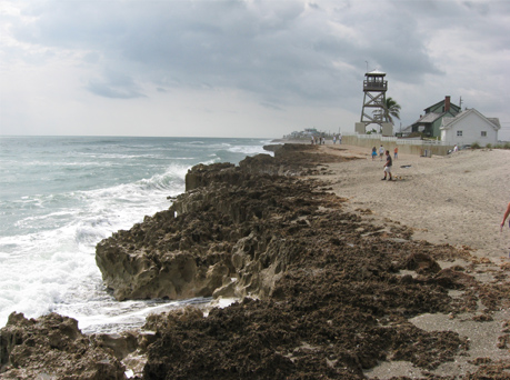 Beach photo of the Anastasia Formation in Hutchinson Island, Florida.